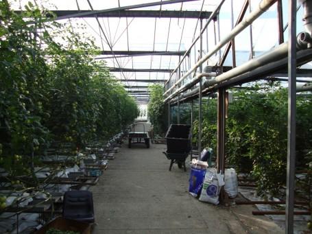 Ringwould Nurseries