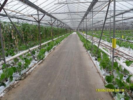 R.M.Sayer Farm
