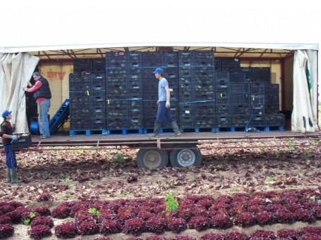 J.E.Piccaver Farm